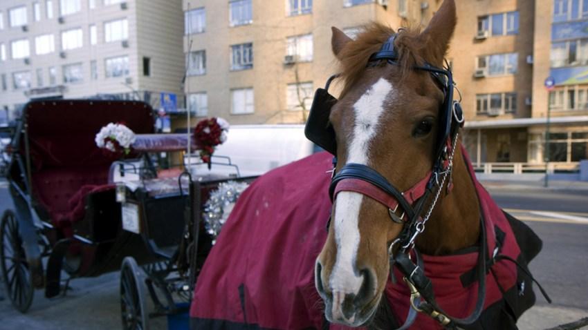 TLMD-caballos-ny-shutterstock