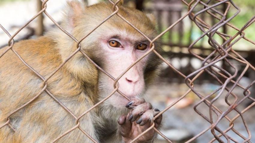 primates_4543535