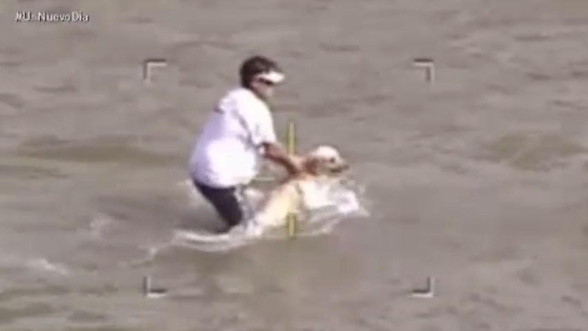 rescate-perro-rio