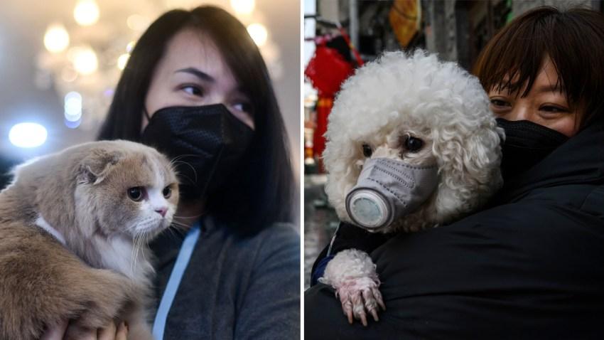 Mascotas coronavirus