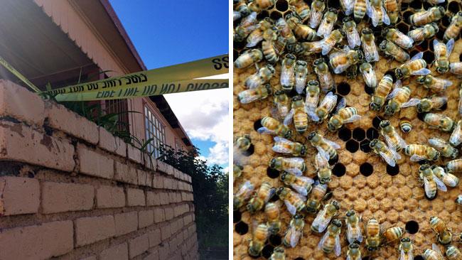 tlmd_abejas_encontradas_en_casa_de_arizona_persona_muere_por_picada_de_abejas