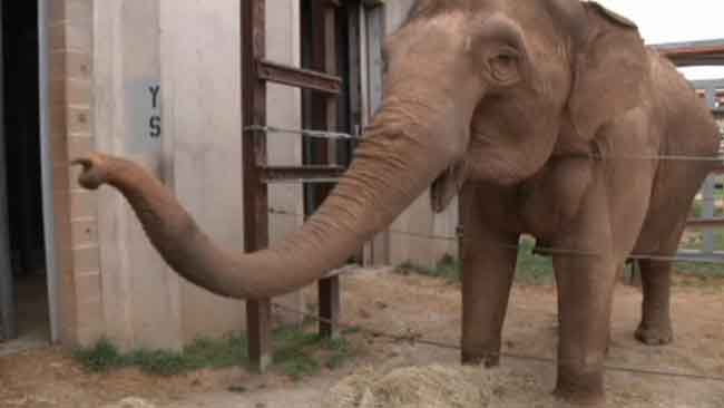 tlmd_elefante