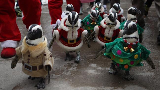 tlmd_pinguinos1