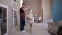 Trucos para entrenar a mascotas