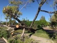 1-Fotos-de-lluvias-en-Arizona-temporada-del-monzon-al-sur-de-Phoenix