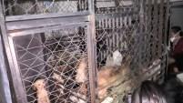 Las autoridades encontraron en su vivienda animales domésticos sin vida en el refrigerador.