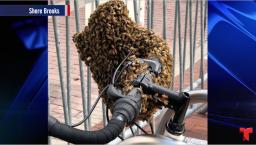 """Abejas """"atacan"""": primero invadieron un cuarto y ahora...una bicicleta"""