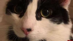 Rescatan a gato encontrado en las calles