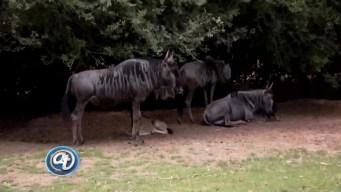 Acceso Total al Word Wildlife Zoo