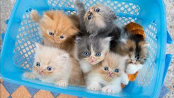 Gatos, mitos y beneficios de tenerlos