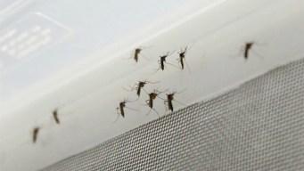 Republicanos presentan ley para lucha contra el Zika por $622 millones