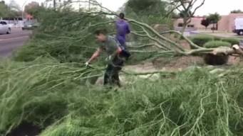 En video: tormenta en Mesa deja daños