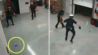 Insólita persecución policial: ardilla escapa de oficiales