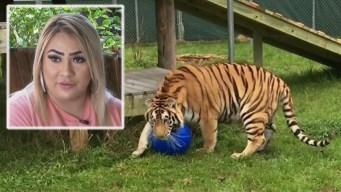 Arresto clave por tigre hallado en casa abandonada