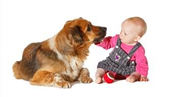 ¿El mejor amigo del bebé?