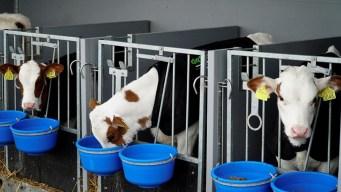 En video: cómo es la granja flotante