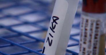 Estudio: Zika ataca testículos y afecta fertilidad en ratones