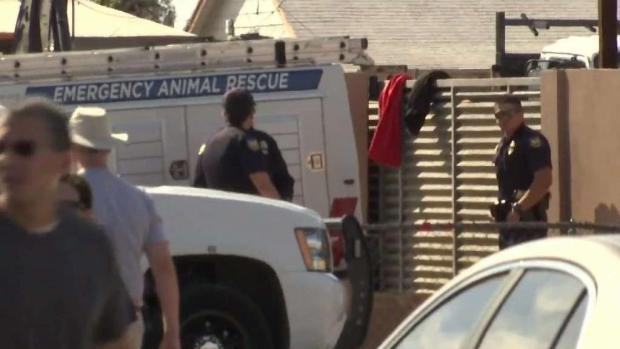 [TLMD - AZ] Descubren sitio clandestino donde realizaban peleas de gallos