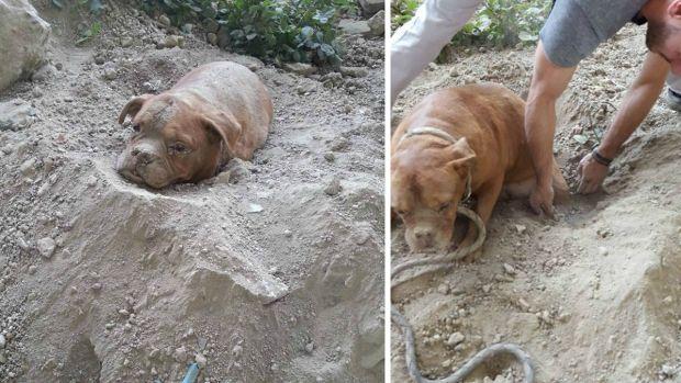 Fotos: Rescatan a perra enterrada viva y arrestan a dueño