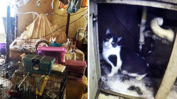 Fotos: Casas de mujeres que vivían con cientos de animales
