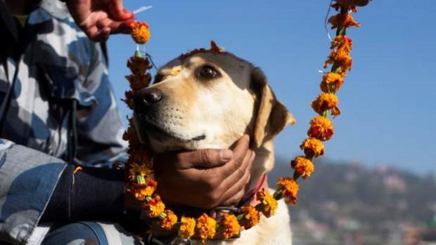 El lugar donde los perros son venerados como dioses