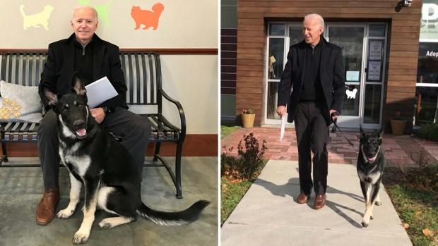 Fotos: los Biden le dan la bienvenida a un adorable perrito de rescate