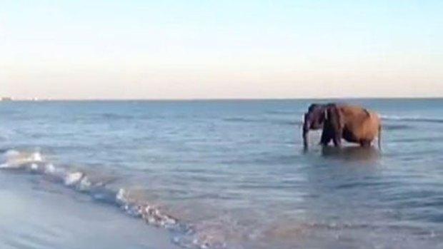 Video: Un tierno bañista en playa de Florida