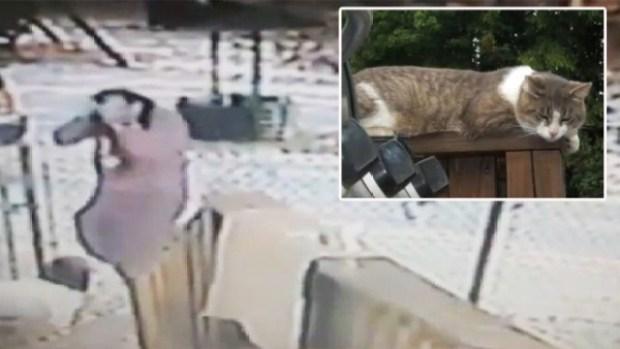 Video: Mujer defiende al gato que la atacó