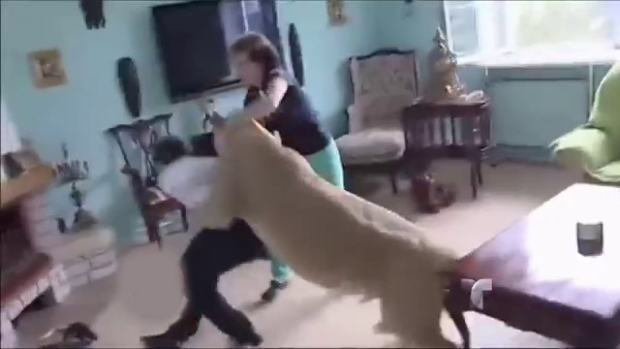 """Video: Leona """"doméstica"""" ataca sin piedad"""