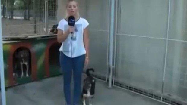 Video: Insólita reacción de perro a reportera