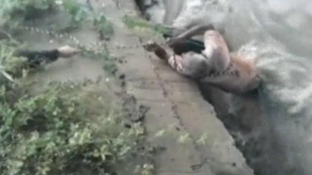 Video: Dramático rescate de anciano en video