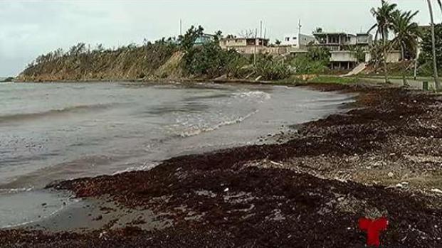 El sargazo: revolución de las algas