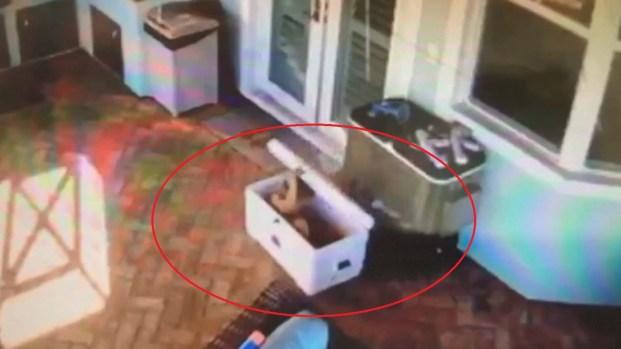 Captado en video el momento en que niño queda atrapado en hielera