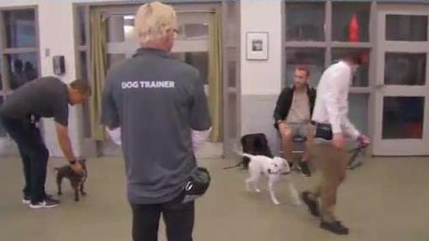 Cuándo tu mascota y tú necesitan clases de obediencia