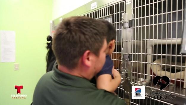 Mascotas con nuevo hogar en Arizona