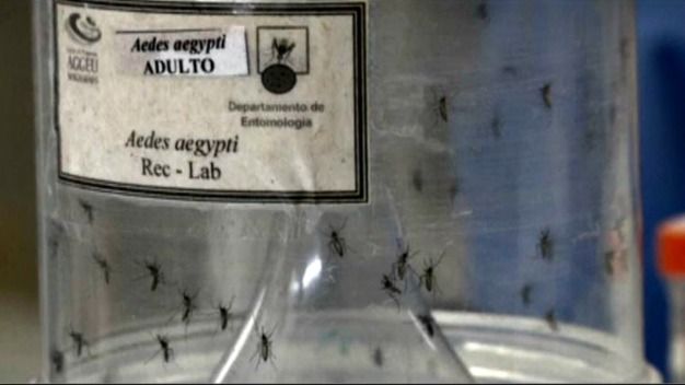 Expertos piden cambiar hábitos para frenar virus como el zika