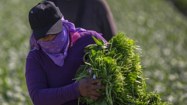 Fallan contra ley que penaliza ayudar a indocumentados