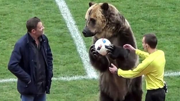 Polémica por video de oso animando partido de fútbol