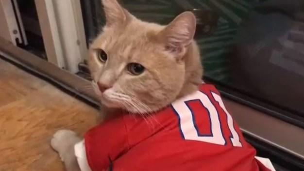 """""""Dusty"""": el gato fanático del béisbol"""