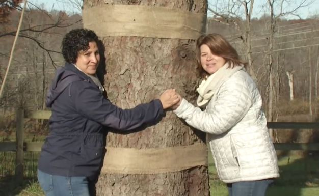 Pareja puertorriqueña dona enorme árbol para el Rockefeller Center