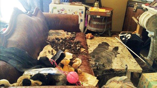 Escapa mujer que vivía con decenas de animales