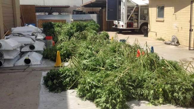 Sorprendente hallazgo de marihuana en Arizona