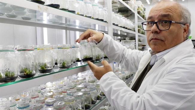 Descubren planta que puede actuar como filtro solar en humanos