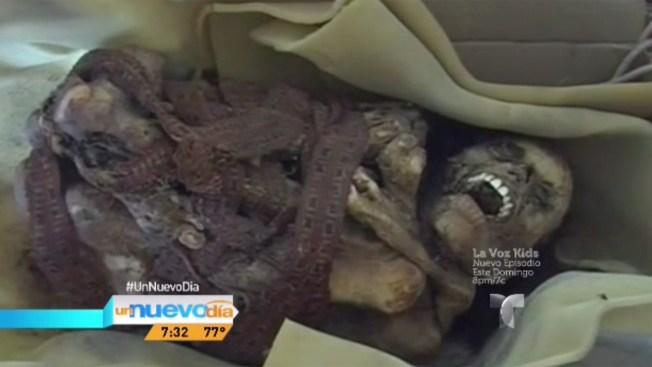 Insólito: encuentran momia en caja de cartón