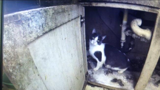 Sorpresivo hallazgo: Decenas de gatos en vivienda