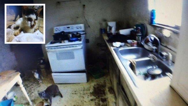 Sorprendente hallazgo de 50 gatos en vivienda