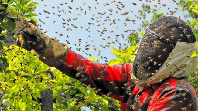 Hombre muere tras ser atacado por cientos de abejas