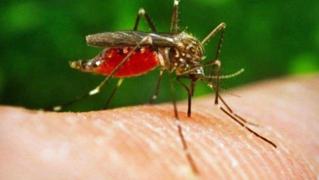 Reportan primer caso de virus del Nilo en Maricopa