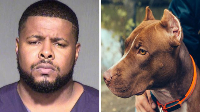 Masivo hallazgo de perros para peleas ilegales
