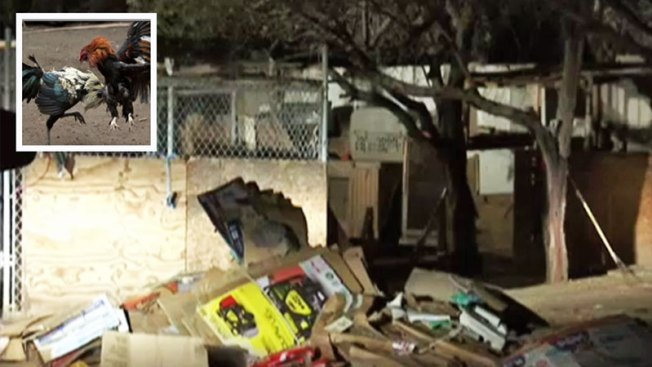 Arizona: Encuentran sitio de peleas clandestinas